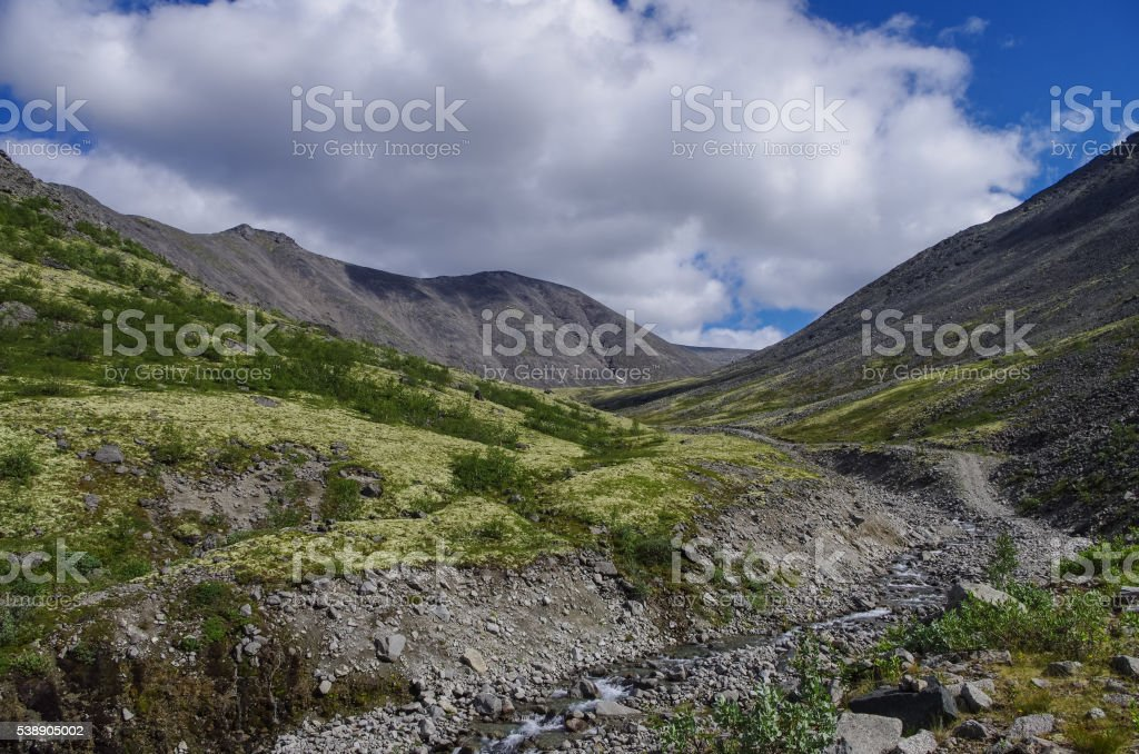 Mountain tundra with mosses and rocks covered with lichens stock photo