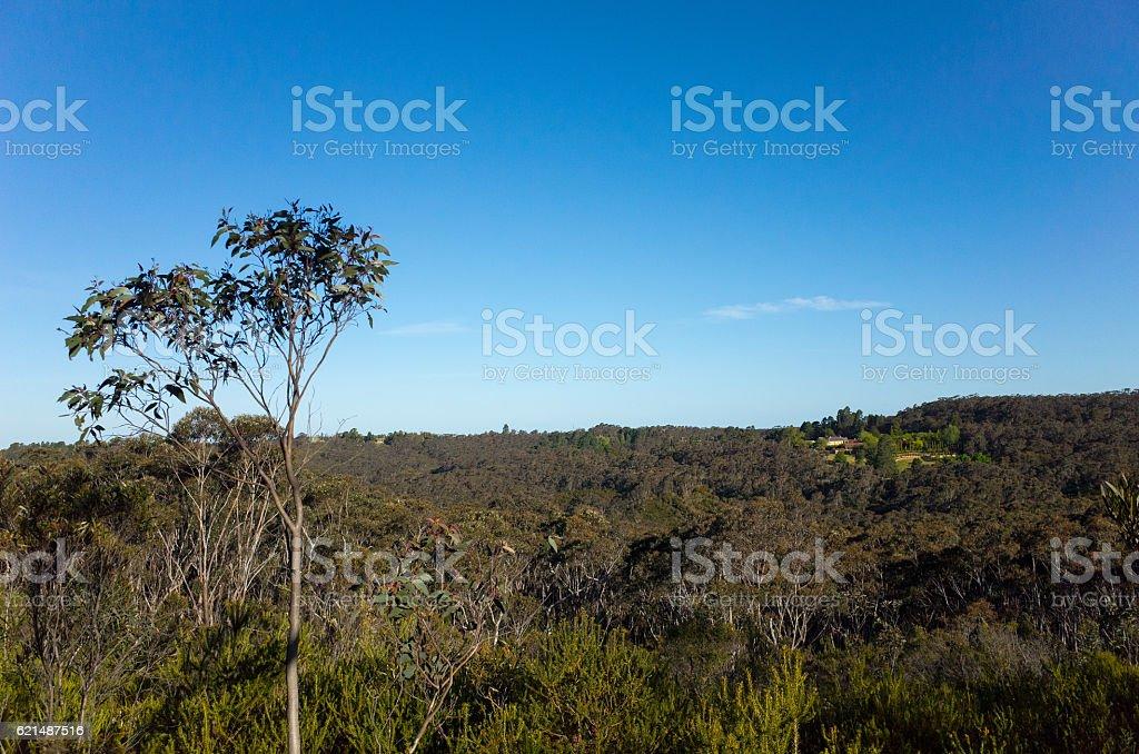Mountain Valley with Eucalyptus trees in the Australian bush photo libre de droits