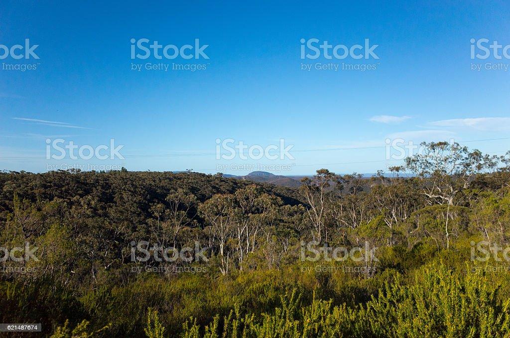 Mountain Valley with Eucalyptus trees in the Australian bush foto stock royalty-free