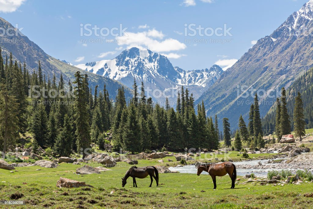 Mountain view in Kyrgyzstan stock photo
