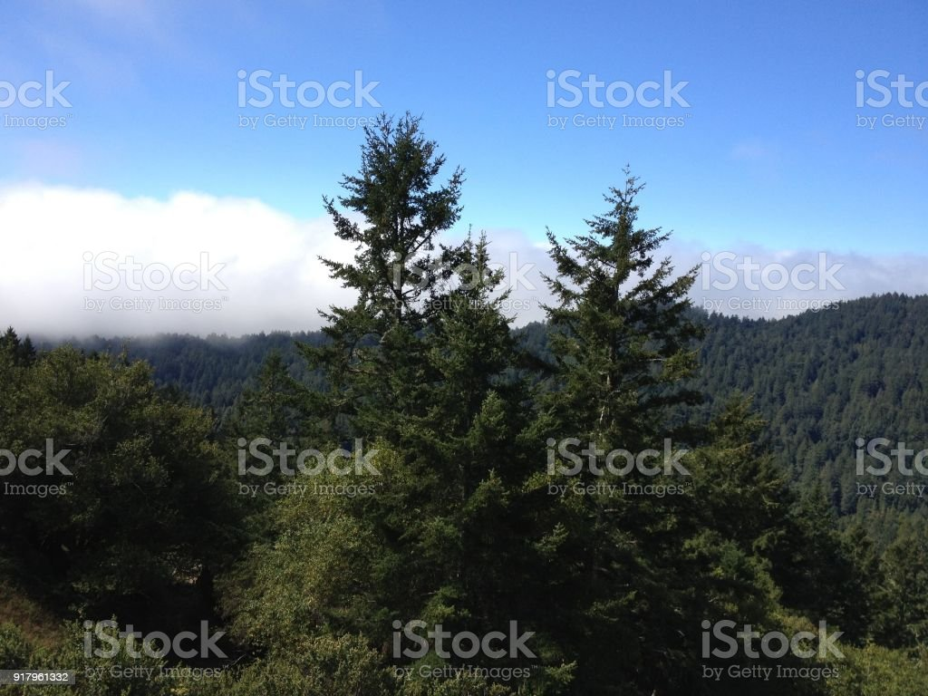 mountain view of mountian covered in wooded trees stock photo