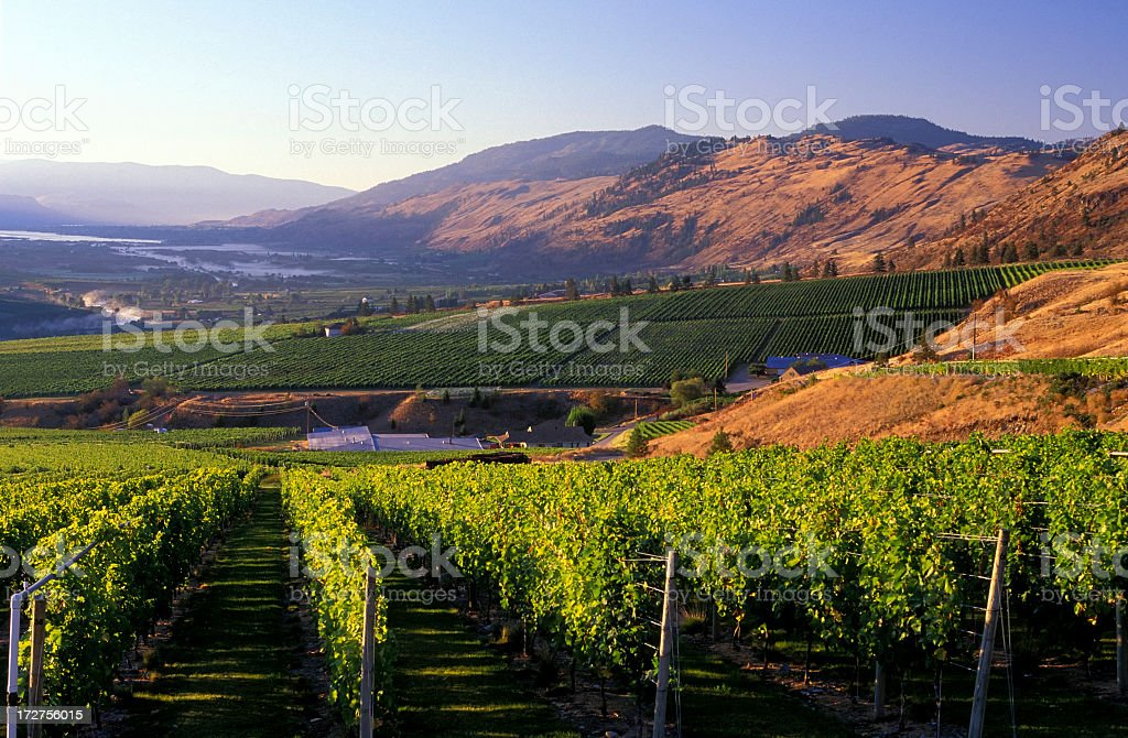 Mountain view of Okanagan valley from winery vineyard stock photo