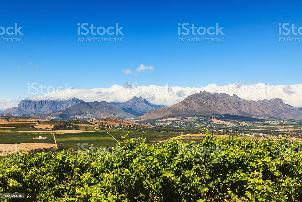 Mountain View Vineyard Stellenbosch South Africa royalty-free stock photo