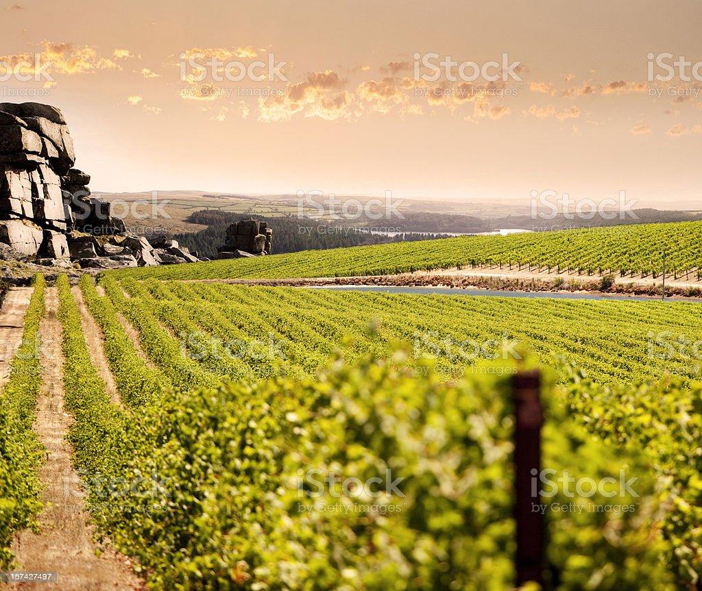 Mountain Vineyard stock photo