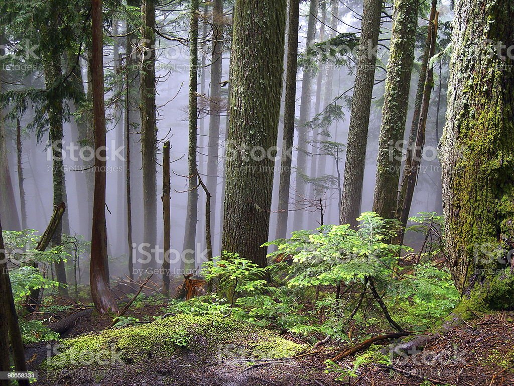 Mountain Wilderness royalty-free stock photo