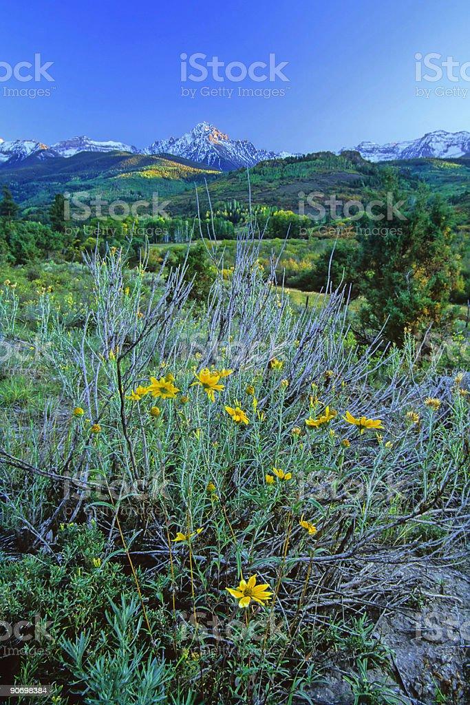 mountain wildflowers stock photo