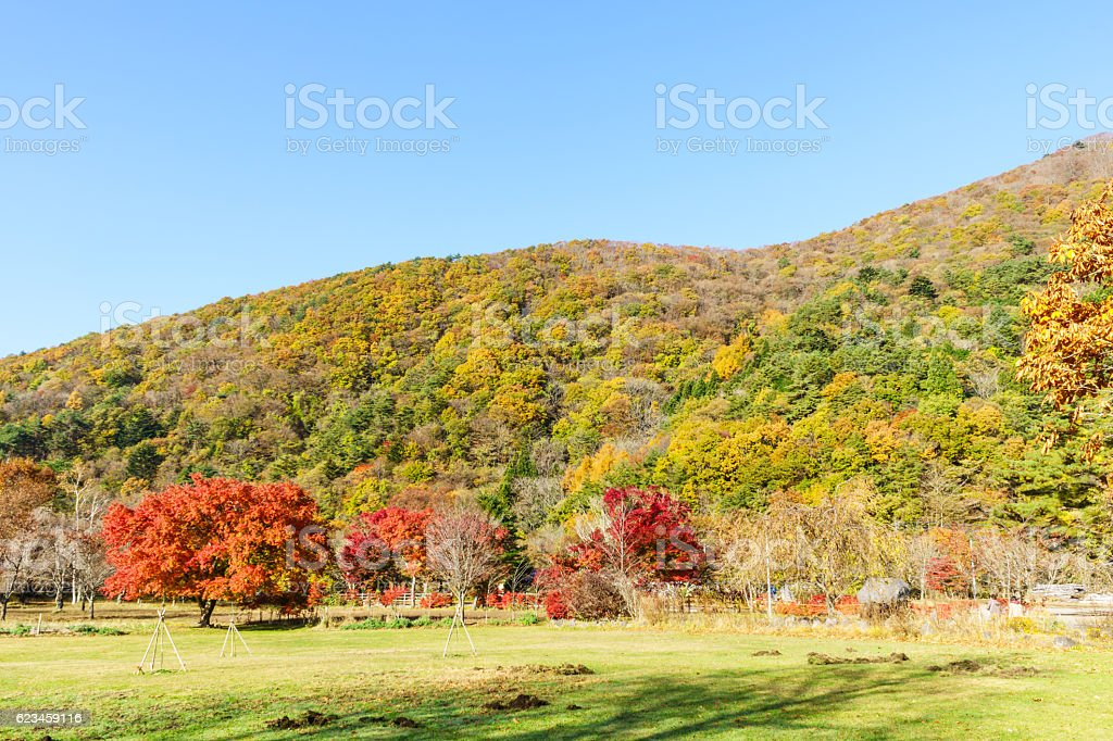 Mountain with Autumn Leaves ストックフォト