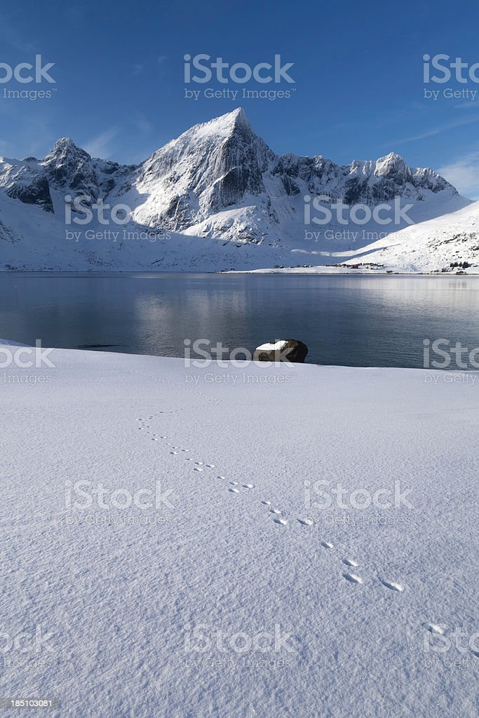 Mountain with Fjord and Animal Tracks stock photo