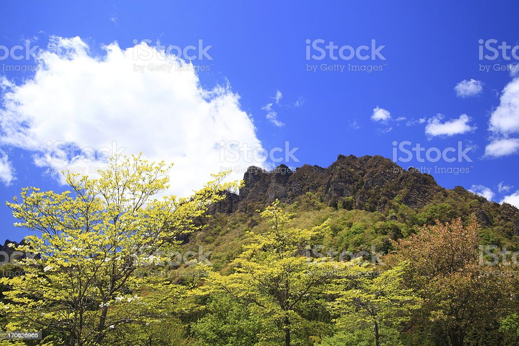 Mountain with fresh green royalty-free stock photo