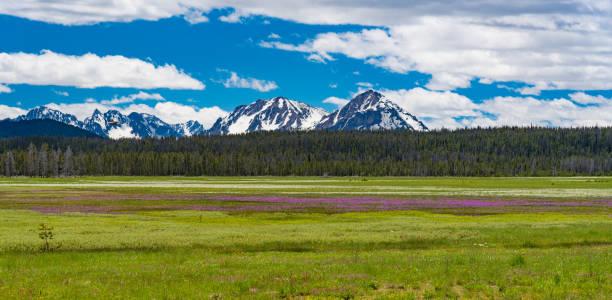 Mountain with purple wildflowers stock photo
