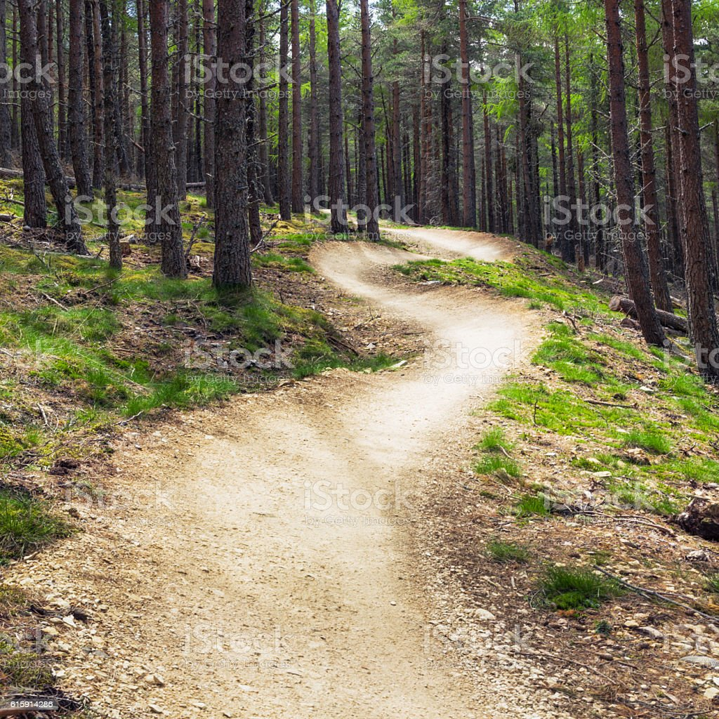 Mountainbike forest track with banked berms stock photo