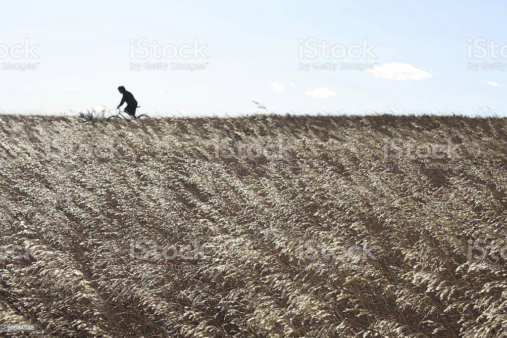 Mountainbiking along the horizon royalty-free stock photo