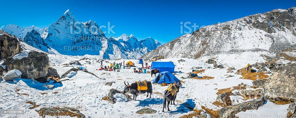 Mountaineers yaks snowy base camp beneath Ama Dablam Himalayas Nepal stock photo