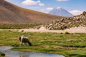 Paisagem montanhosa com ovelha pastando na Cordilheira dos Andes no Deserto do Atacama, Chile.