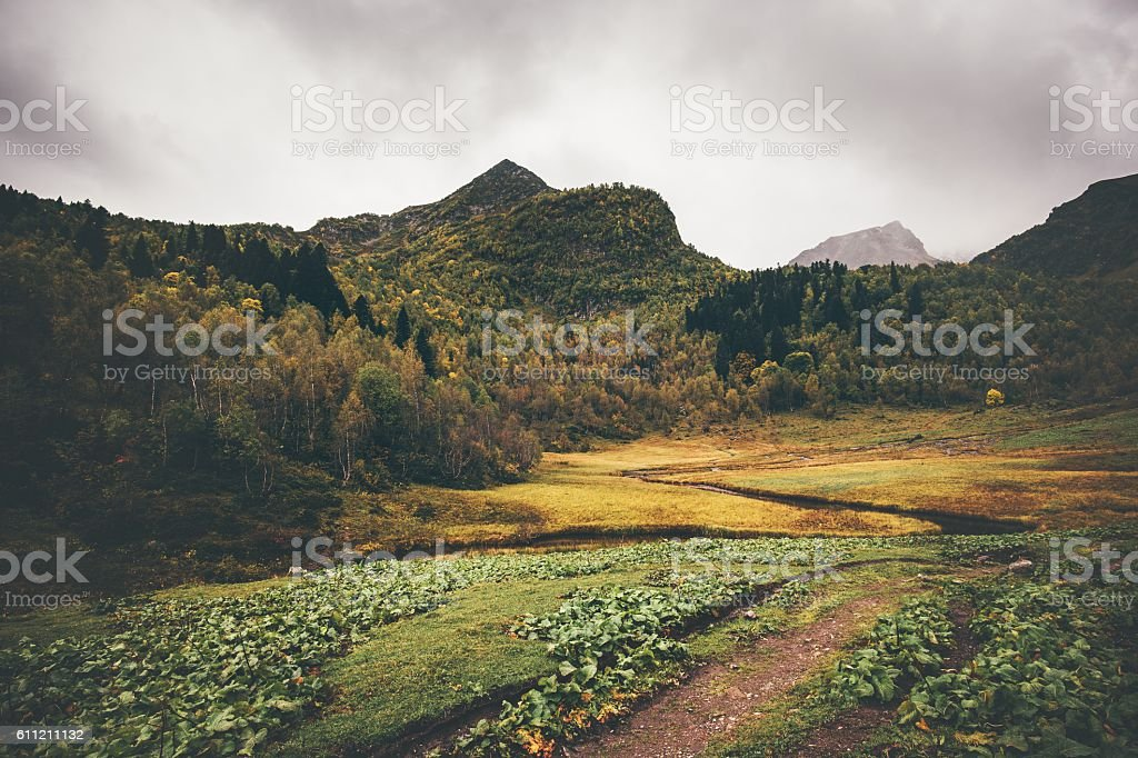 Mountains and autumn Forest Landscape Travel stock photo