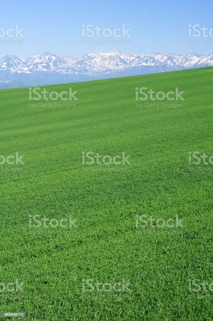 Mountains and blue wheat field foto stock royalty-free
