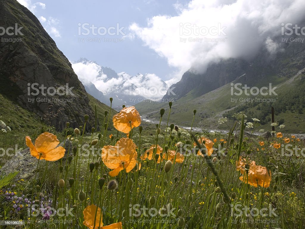 Mountains and flowers royalty-free stock photo