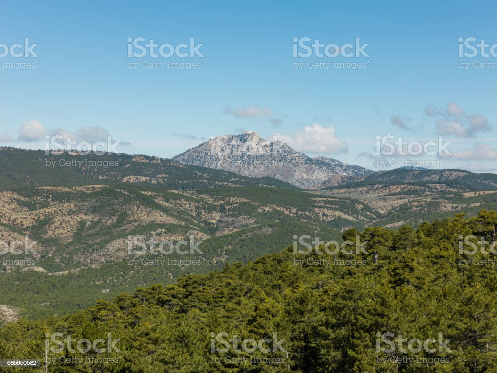Mountains and forest at sunny day 免版稅 stock photo