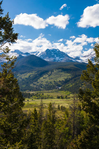 Mountains and forest of Rocky Mountain National Park Mountains and forest of Rocky Mountain National Park rocky mountain national park stock pictures, royalty-free photos & images