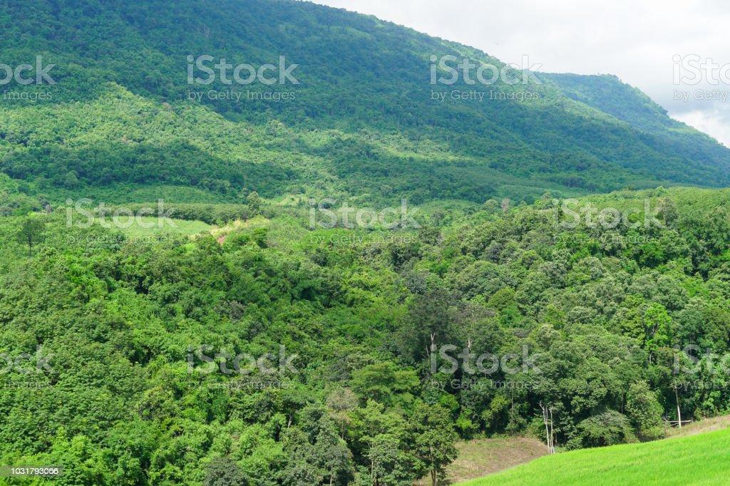 Berge und Wälder – Foto
