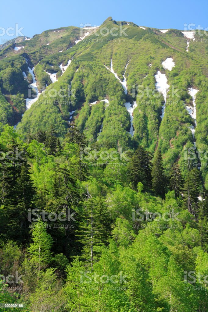 Mountains and green foto stock royalty-free