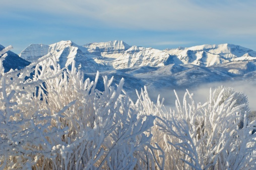Mountains and hoarfrost covered sagebrush