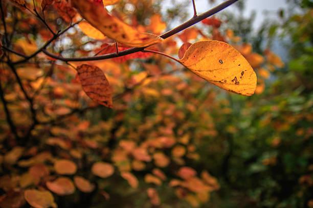 Berge und Blätter – Foto