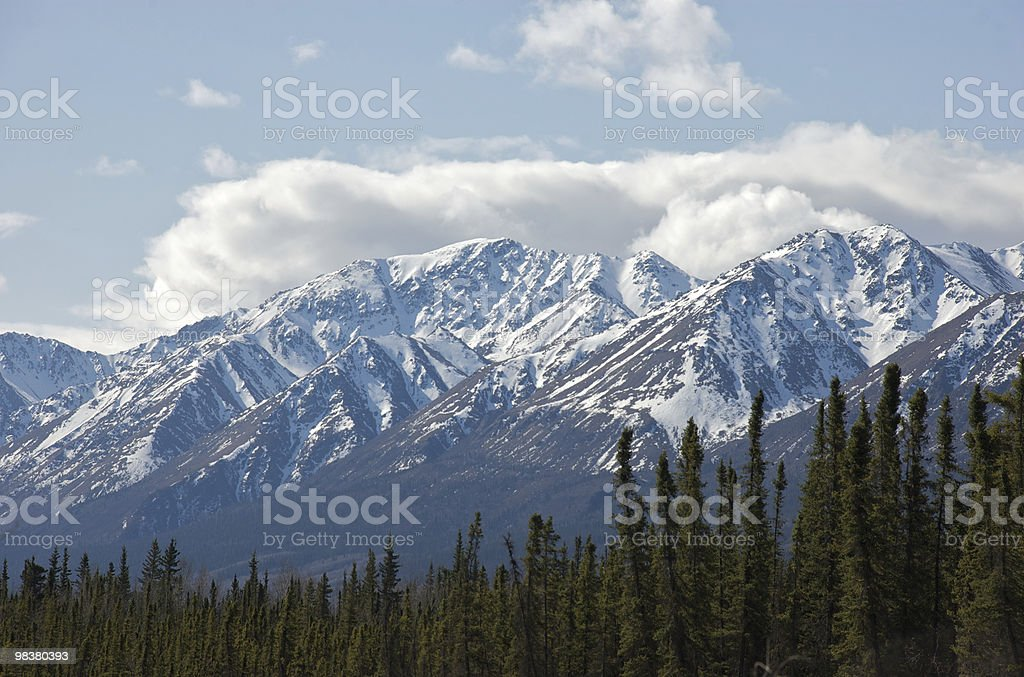 Mountains and Spruce royalty-free stock photo
