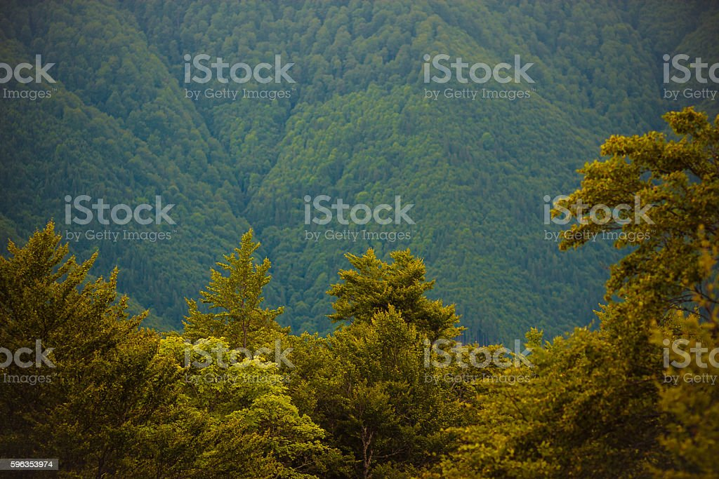 Mountains at sunset. Carpathians royalty-free stock photo