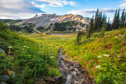 Mountains, blooming flowers, fresh pines and and Valleys, Canada