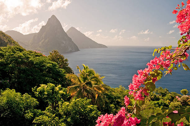 Mountains by the ocean in st lucia with pink flowers picture id157529012?b=1&k=6&m=157529012&s=612x612&w=0&h=pj6unmcjg11bgs7zx4axyaslzdkxkm53aisbi2f 5 g=