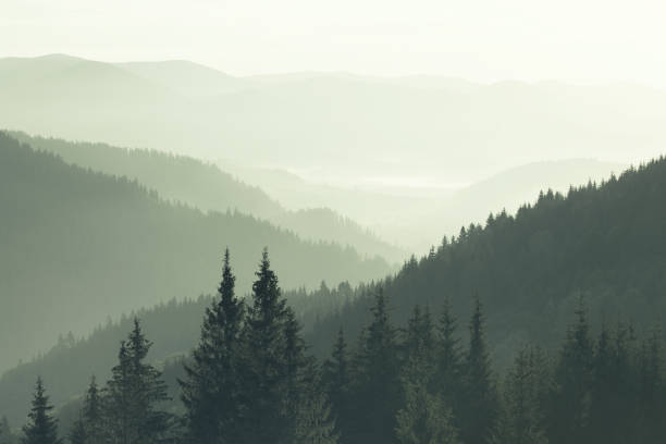 Mountains covered with woods in the early morning mist Mountains covered with woods in the early morning mist mountains in mist stock pictures, royalty-free photos & images