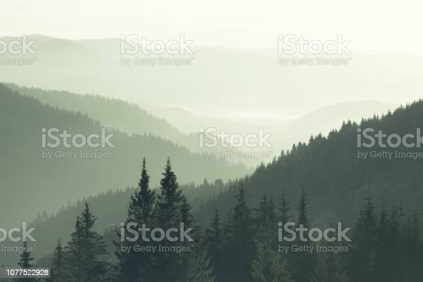 Photo of Mountains covered with woods in the early morning mist