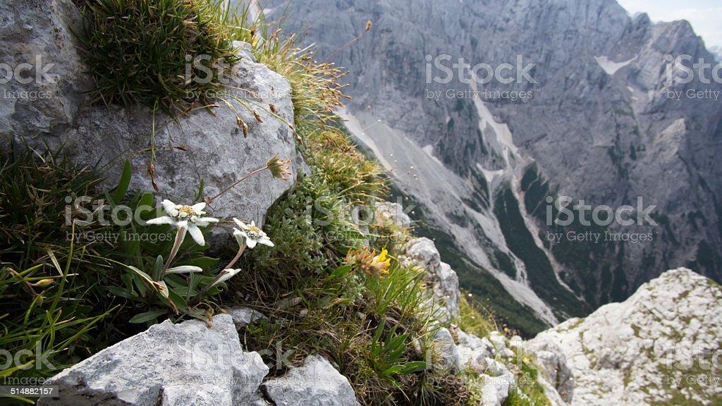 Mountains flora stock photo