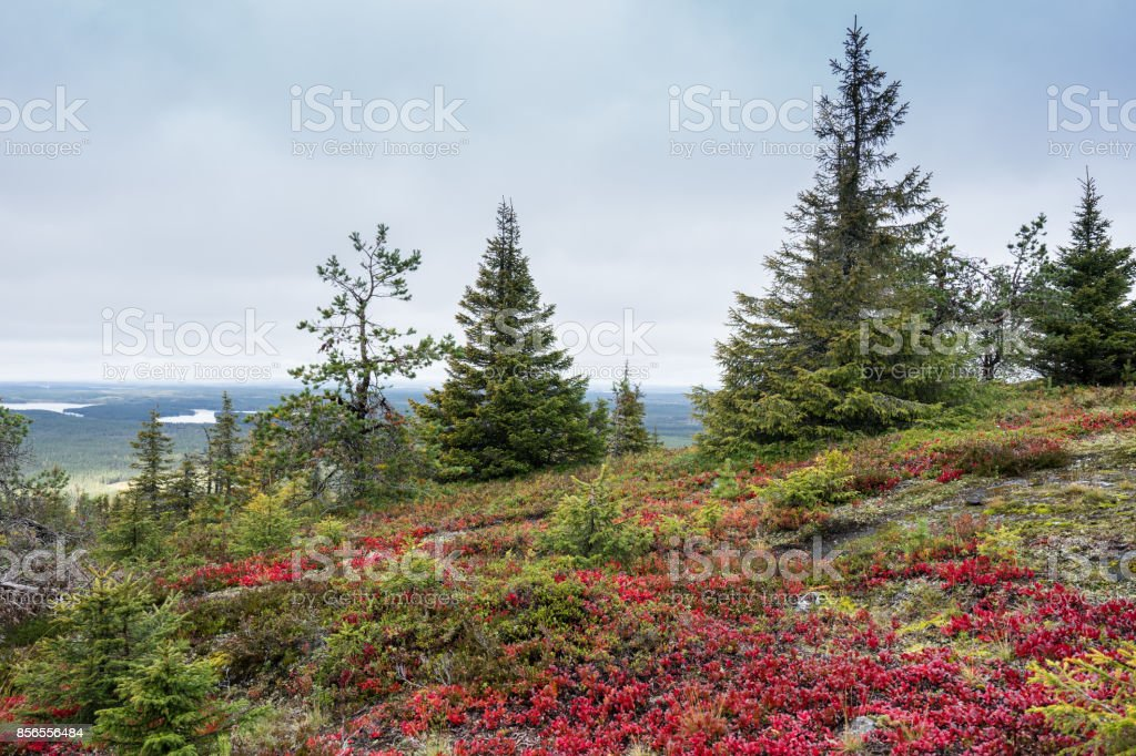 Mountains, forests, lakes view in autumn. Fall colors - ruska time in Iivaara. Oulanka national park in Finland. Lapland, Nordic countries in Europe stock photo