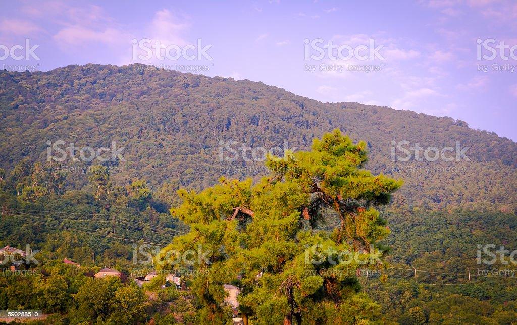 mountains, green, tree stock photo