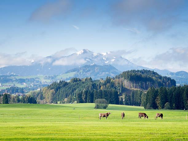 berge in bayern - allgäu stock-fotos und bilder