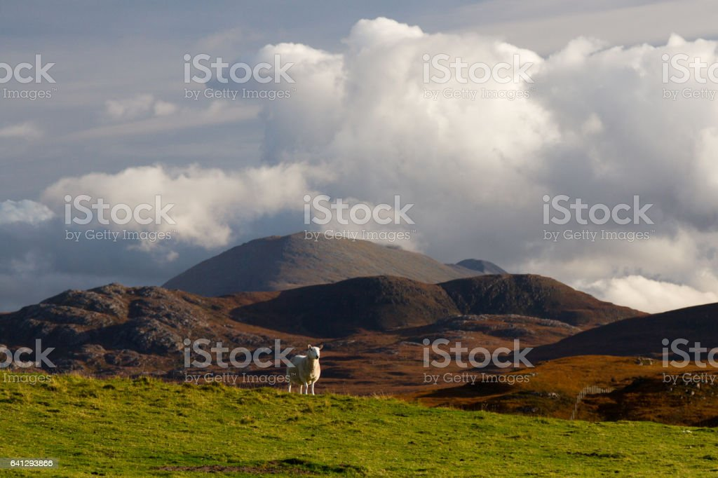 Mountains in Scotland with sheep stock photo