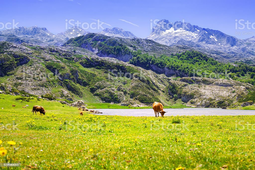 mountains landscape with lake and pasture stock photo