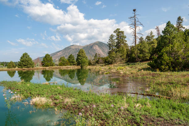 Mountains Reflected in a Pond stock photo