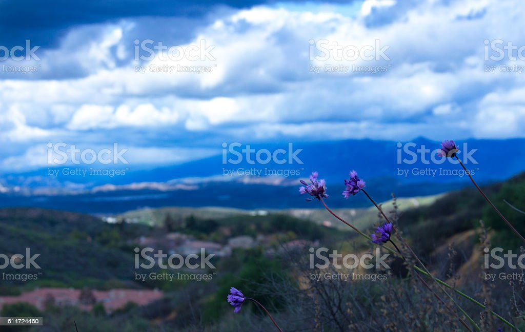 Mountains view in a cloudy day with purple wildflowers stock photo