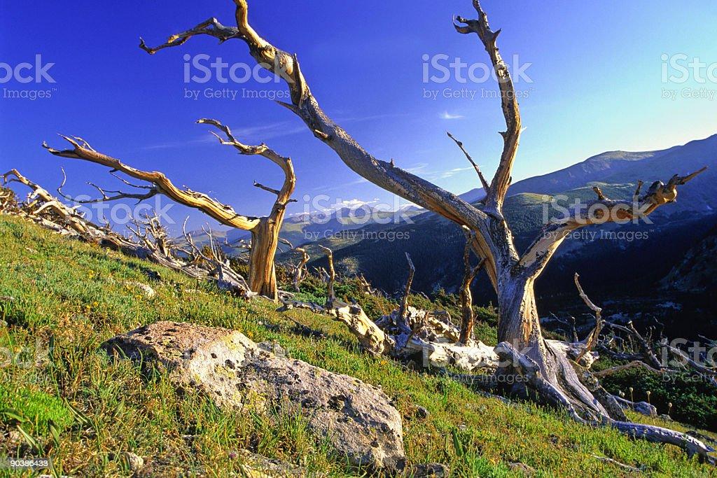 mountainside weathered tree landscape stock photo