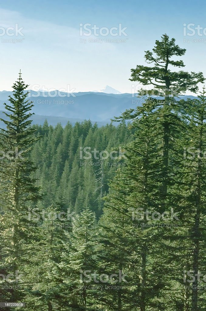 Mountaintop view of forest conifers and distant mountain stock photo