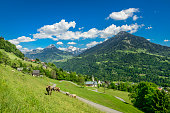 The idyllic mountain-village Innerberg in Vorarlberg in the Austrian alps. There are some cows in the meadow in the foreground and a mountain-range and blue sky with some white clouds in the background.