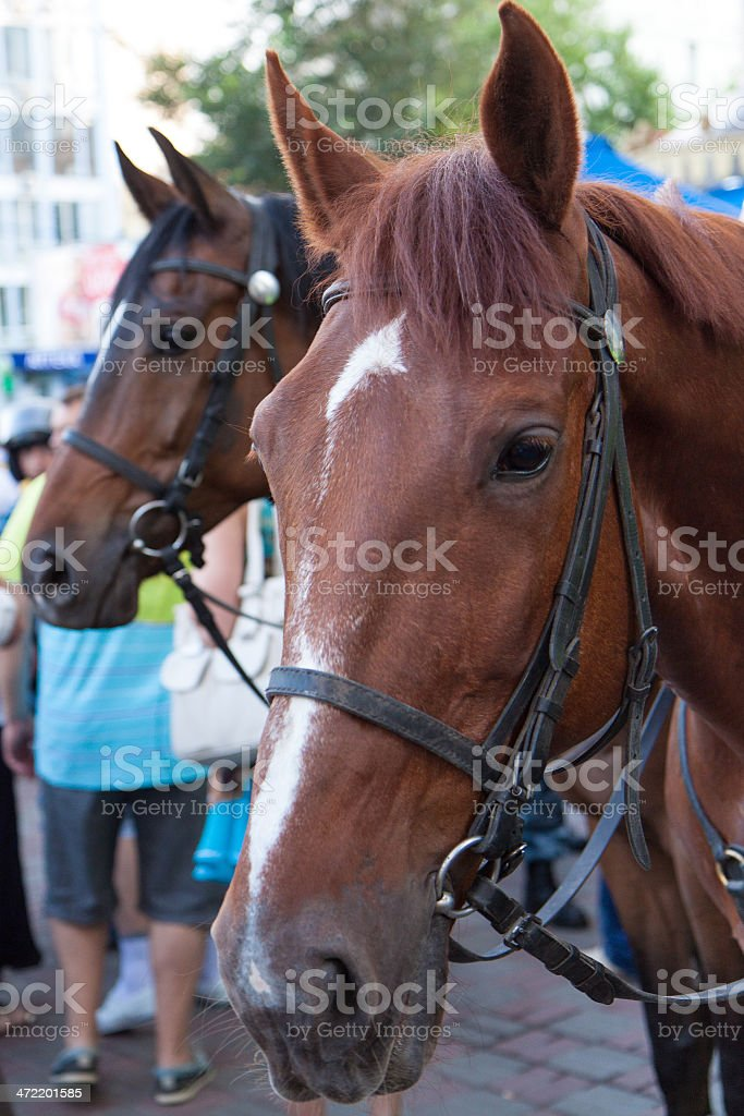 Mounted Police Horse stock photo