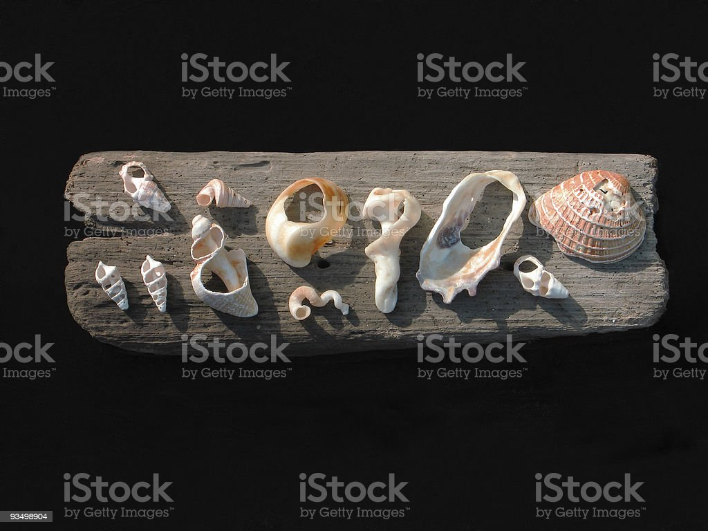 Mounted Shells royalty-free stock photo