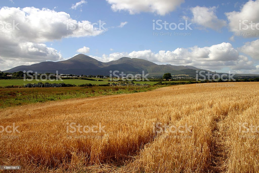 Mourne Harvest stock photo