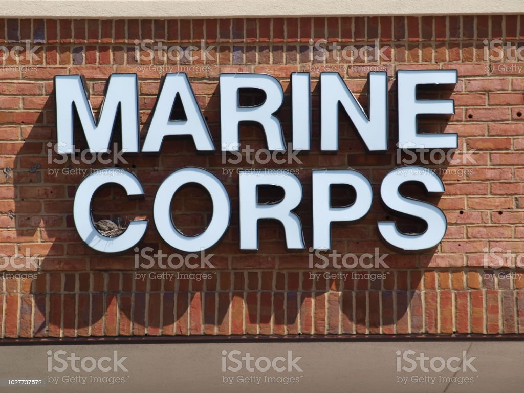 Mourning Dove Selects Marine Corps stock photo