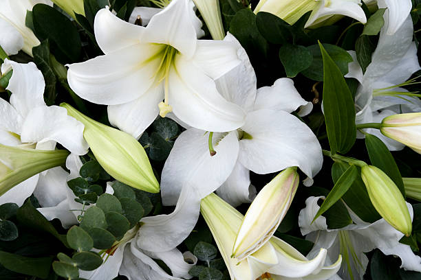Mourning lilies A beautiful wreath of white lilies with eucalyptus leaves. lily stock pictures, royalty-free photos & images