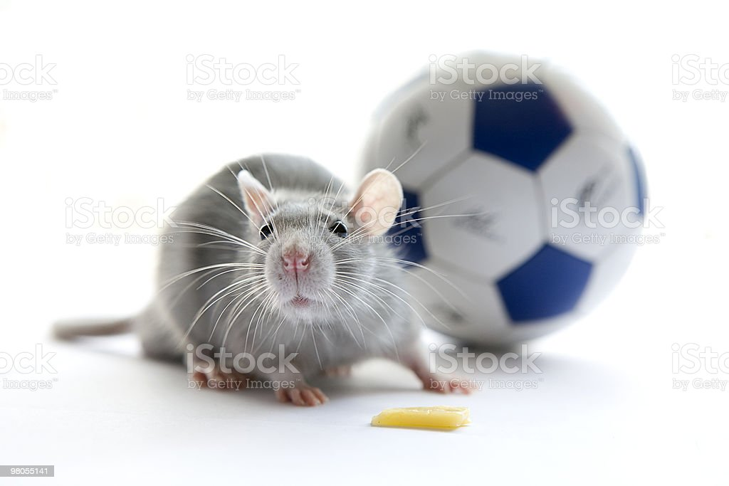 Mouse and football. Over white. stock photo